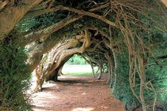 Natural canopy, love it.