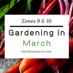 This February Seed Starting Schedule is for those of you that live in the colder northern zones. Now is the time to get serious about starting seedlings! Fall Vegetables, Growing Vegetables, Growing Tomatoes, Growing Shallots, Canned Pickled Beets, Drip Irrigation System, Drip System, Garden Watering System, Growing Green Beans