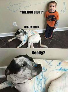 the-dog-did-it-really-bro-dog-meme.jpg (500×679)