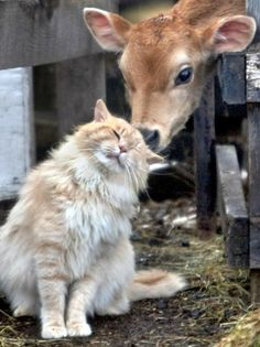 My favorite kind of cow and my favorite kind of cat