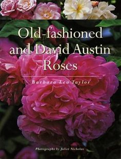 Old-fashioned and David Austin Roses by Barbara Taylor http://www.amazon.com/dp/155297880X/ref=cm_sw_r_pi_dp_HMXEvb0TR0G1F