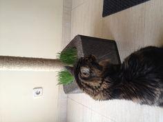 DIY cat's scratching post