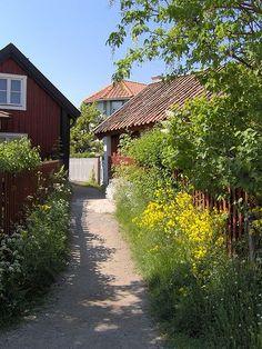 Lantligt, falurött hus, staket, vilda blommor Sandhamn village, Stockholm skärgård.