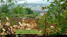 Il #paesaggio è fatto di tanti indispensabili elementi che uniscono #bellezza e funzionalità, come le #siepi. Fonte di cibo e di rifugio per gli #animali e per lo sguardo.  #green #sprecozero #bellezza #creatività #nutrireilpianeta #energiaperlavita #ruraland #comunicareilrurale #ruralandwed #ruraland4 #tradizioni #acqua #biodiversità #clima #energia #risorsenaturali #ambiente  Ancora 53 giorni e anche tu potrai partecipare al ruraland-WED.