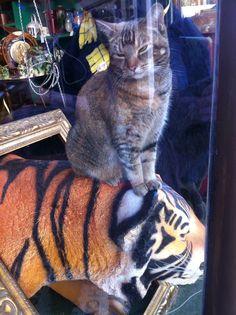 Cat on Tiger. Bath. Glyn Overton.