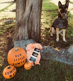 Baby Announcement Ideas With Dogs Save The Date 39 Trendy Ideas October Pregnancy Announcement, Halloween Pregnancy Announcement, Baby Announcement Pictures, New Baby Announcements, Pregnant Halloween, Baby Halloween, Baby Boy Haircuts, Baby Boy Cards, Pregnant Dog