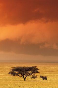 wonderous-world:  Serengeti Elephant by Greg Du Toit