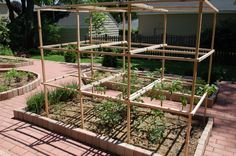 My no-fail tomato cages