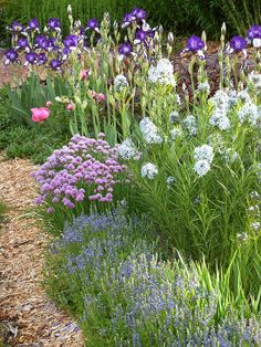 In this photo, Veronica umbrosa, Allium schoenoprasum, Amsonia tabernaemontana, and iris create a melange of blues.