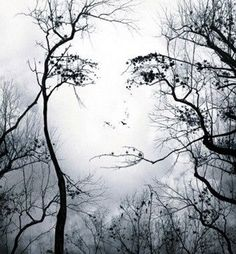 ❦ Face in Trees Illusion~ Cool that you can see a female face is in the open space between the tall trees with the lower branch forming the mouth.