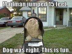 Cat in mailbox