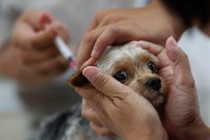 Anti-Vaccine Movement Spreading to Pet Owners -- NYMag
