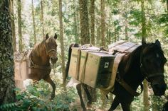 Volunteer vacations with WTA to maintain trails.  Horses pack in food and supplies so you can eat well in the wilderness.