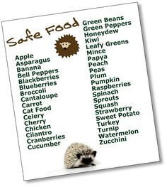 Know your hedgehog food!
