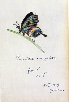 Vladimir Nabokov's butterfly art – in pictures---  https://www.theguardian.com/books/gallery/2016/may/26/vladimir-nabokov-butterfly-art-illustrations