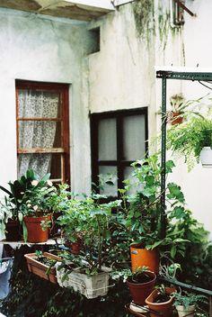 o jardim da dona mimi, august 2011 Outdoor Spaces, Outdoor Living, Balcony Garden, Balcony Plants, Green Life, Indoor Plants, Potted Plants, Potted Garden, Flowering Plants