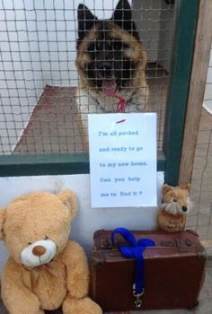 Codi has been waiting for his new home for over a year now He is so keen he has even packed his bags ready :) Are you the one for him? Japanese Akita, Can You Help Me, Waiting For Him, Ready To Go, Are You The One, Trust, New Homes, Teddy Bear, Bags
