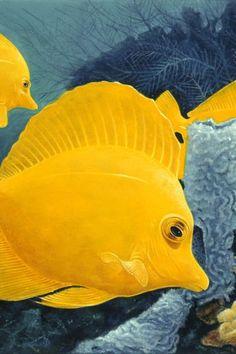 Poster - Yellow Tangs