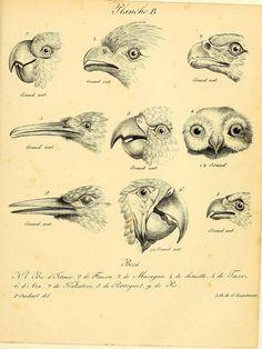 t. 2 - La galerie des oiseaux / - Biodiversity Heritage Library