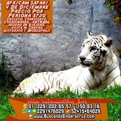 Este próximo 4 de Diciembre recuerda que tenemos la #excursión a #africamsafari no te quedes fuera Más información en: Tels: 01 (229) 202 65 57 y 150 83 16 PRIP ID: 52 * 15 * 64029 Cel - WhatsApp - Line - Google Allo: 2291476029 BB Pin #7A43560A Email / Hangouts: turismoenveracruz@gmail.com Link http://www.buscandoenveracruz.com/