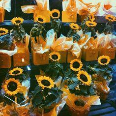 la flora de el sol