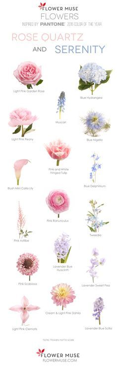 2016 Pantone Color of the Year - Rose Quartz and Serenity - Flower Inspiration. See it on Flower Muse Blog: http://www.flowermuse.com/blog/serenity-rose-quartz-flowers/