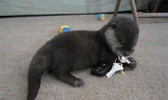 I heard imgur likes otters, here are 35 otter gifs. - Album on Imgur