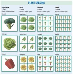 Plant spacing chart