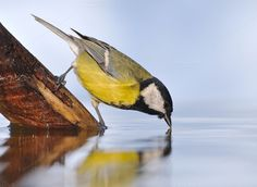 Bird drinking water. by CreativePhotoSpain on Creative Market