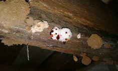 Mine Fungus Fungi, Mother Nature, Homes, Invitations, Shape, Houses, Mushrooms, Home, Save The Date Invitations