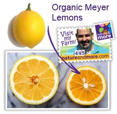 Meyer Lemon variety from Taner.   Compared to the regular lemon,  Meyer lemons are :  • Smaller and rounder  • Smoother, thinner zest • Deep yellow to orange skin  • Darker yellow pulp • Sweeter and less tangy • Juicier !  #organic #lemon #meyer #taner #natureandmore #code 445