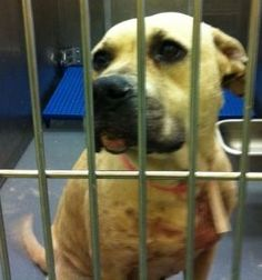rescued from memphis animal shelter