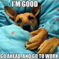 Although I don't let the dogs under the blanket this is what I imagine they are thinking in the morning when I get up to get ready.