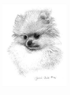 11 x 14 Pomeranian Puppy Art Print by Jennie by jennietruitt, $15.00
