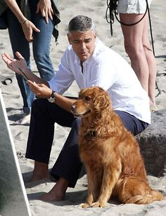 GeorgeClooney with his Golden Retriever cast mate
