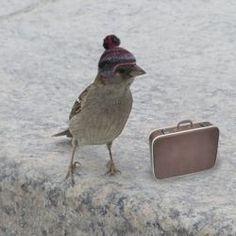 This bird is dressed and packed for a trip wearing the world's smallest hand-knitted pom pom hat :)