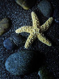 Mike Moats | Starfish