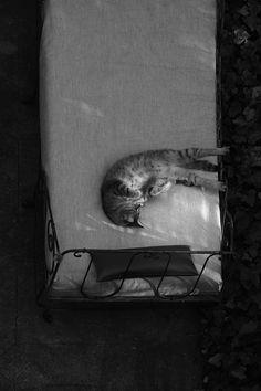 Encore une journée difficile. Crazy Cat Lady, Crazy Cats, Lovers Kiss, Moon Painting, It Cast, Animales, Making Out Couple