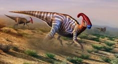 Artist's impression:Parasaurolophus; vegetarian but ate seafood,too...