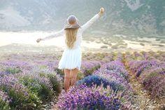 Lavender Fields in Mona, Utah
