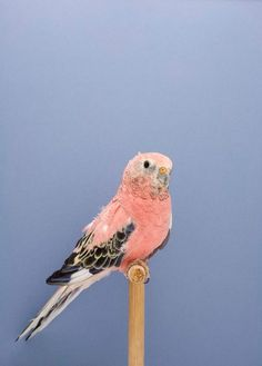 """""""The incomplete dictionary of show birds.""""  by photographer Luke Stephenson"""