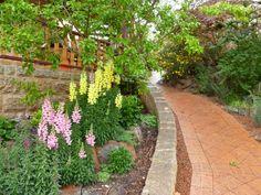 Mark's garden