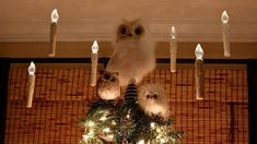 """Harry Potter tree with """"floating"""" candles"""