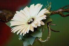 Gerber daisy wrist corsage