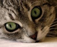 Cómo y por qué esterilizar a mi gato: http://animales.uncomo.com/articulo/como-y-por-que-esterilizar-a-mi-gato-4844.html