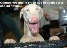 No es que me alegre pero...        Gracias a http://www.cuantocabron.com/   Si quieres leer la noticia completa visita: http://www.estoy-aburrido.com/no-es-que-me-alegre-pero/