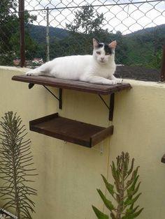 Prateleira para nosso gato Pepe!
