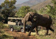 Book your Pilanesberg Game Reserve accommodation or day safari with the experts. 23 years experience in the Pilanesberg area. North West Province, Wildlife Protection, Game Lodge, City North, Sun City, Holiday Resort, Game Reserve, Exotic Places, Park Hotel