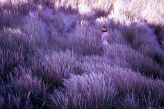 Imagem de purple, nature, and photography