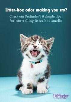 Litter box odor making you cry? Check out these six easy #diy steps to ban the smells.